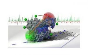 Scuola sullo studio delle proteine con spettroscopia