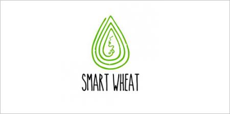 Smart Wheat