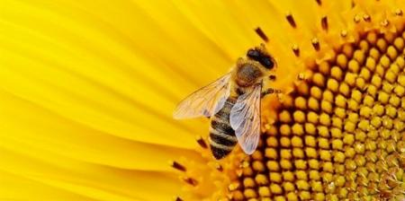 pesticidi di nuova generazione